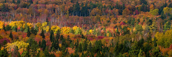 Autumn Art Print featuring the photograph Autumn Trees Panorama by Matt Dobson