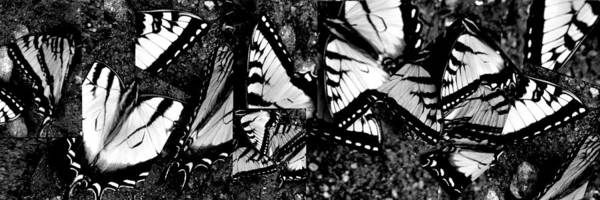 Butterfly Art Print featuring the photograph Salad Bowl by Halle Kirsch