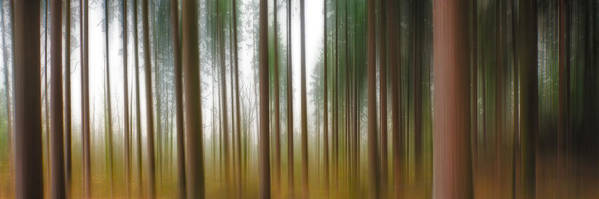Forest Art Print featuring the photograph Bring Me Home by Andre Distel