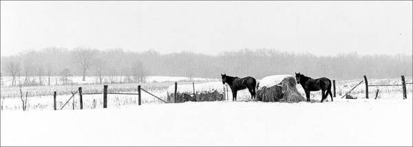 Kentucky Landscape Art Print featuring the photograph Cold Stare by Wendell Thompson