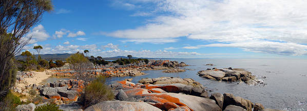 Water Art Print featuring the painting Bay Of Fires Panorama by Glen Johnson