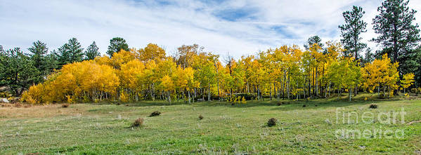 Fall Art Print featuring the photograph Colorado Fall Panorama by Baywest Imaging