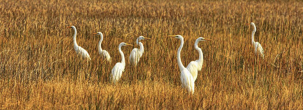 Cranes Art Print featuring the photograph Which-way by Ronald Lafleur