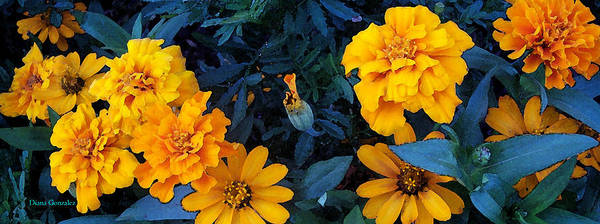 Flowers Art Print featuring the painting Goldies by Diana Gonzalez