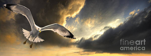 Gull Art Print featuring the photograph Gull With Approaching Storm by Meirion Matthias