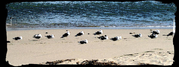 Bird Art Print featuring the photograph All My Gulls In A Row by Ellen Lerner ODonnell