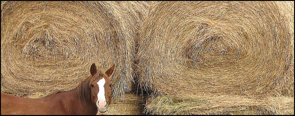 Horse Art Print featuring the photograph Hay Horse by Darlene Grubbs