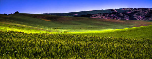 Bearded Wheat Art Print featuring the photograph Sunshine On The Palouse by David Patterson