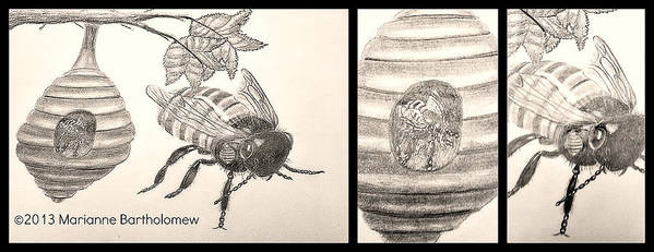 Bee Art Print featuring the drawing The Life Of The Bee by Marianne Bartholomew
