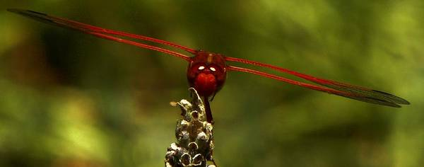 Insect Art Print featuring the photograph Precision by Michael Snyder