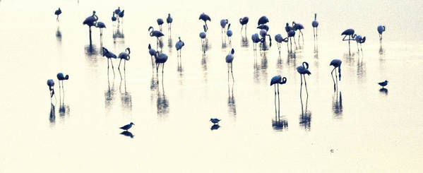 Swan Art Print featuring the photograph Swan Lake by Anusha Hewage
