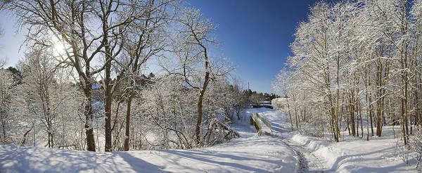 Way Art Print featuring the photograph Winter Path by Anna Grigorjeva