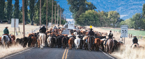 Roundup Art Print featuring the photograph Cattle Drive 3 by Gary Rose