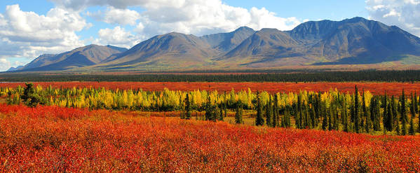 Alaska Art Print featuring the photograph Talkeetna Mountains Moment by Alan Lenk