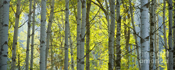 Trees Art Print featuring the photograph Autumn Through The Trees by Idaho Scenic Images Linda Lantzy