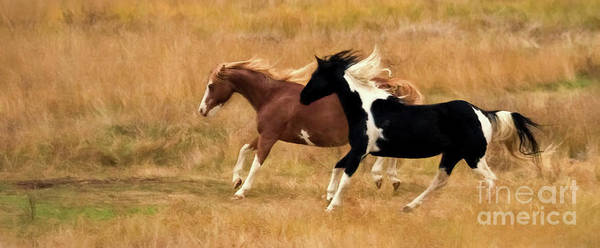 Frolicking Horses Art Print featuring the photograph Frolicking Horses by Priscilla Burgers