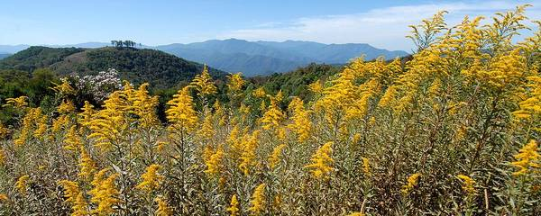 Mountain View Art Print featuring the photograph Goldenrod Mountain View by Alan Lenk