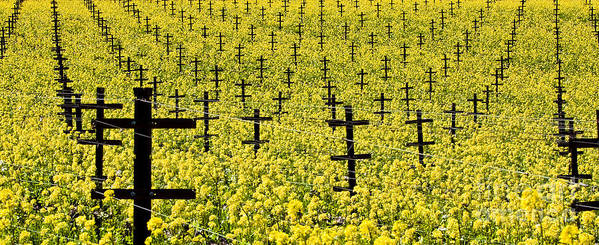 Vineyard Art Print featuring the photograph Mustard Color In The Vineyard Napa Ca. by Jon Cretarolo