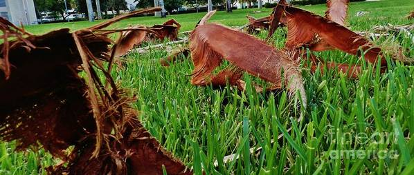 Palm Art Print featuring the photograph Pieces In The Lawn by Robert Ulmer