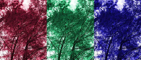 Tree Art Print featuring the digital art Rgb Trees by Ron Hedges