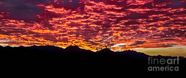Sunrise Art Print featuring the photograph Believe It Or Not by Robert Bales
