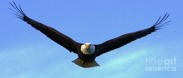Bald Eagle Art Print featuring the photograph Bald Eagle Victory by Dean Edwards