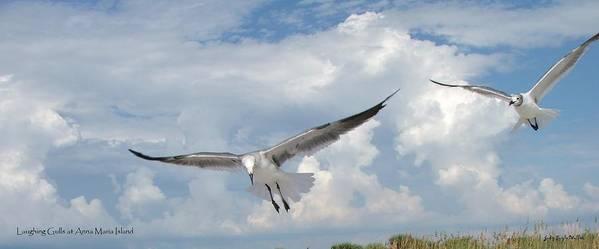 Gulls Art Print featuring the photograph Gulls In Flight by Judy Waller