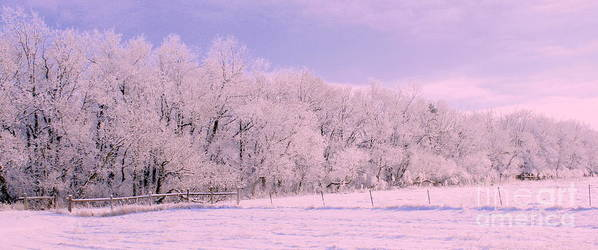 Snowy Sunday Art Print featuring the photograph The Grove by Julie Lueders