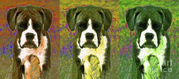 Animal Art Print featuring the photograph Boxer Three 20130126 by Wingsdomain Art and Photography