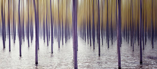 Tranquility Art Print featuring the photograph Climate Change by Iñaki De Luis