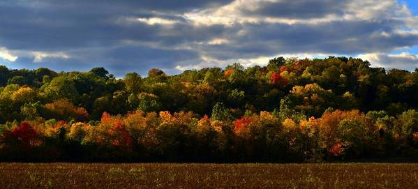 Autumn Art Print featuring the photograph The Layers Of Autumn by Julie Dant