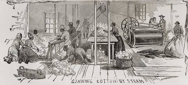 History Print featuring the photograph Ginning Cotton By Steam Powered Gin by Everett