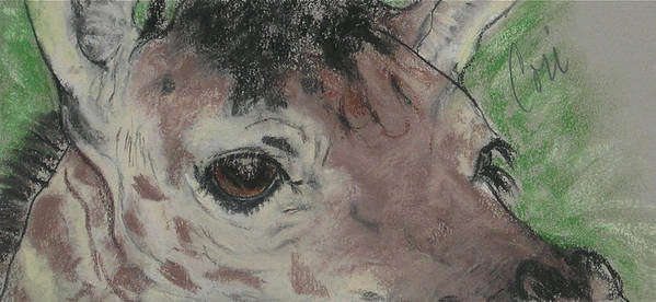 Giraffe Art Print featuring the drawing Eyes On You by Cori Solomon