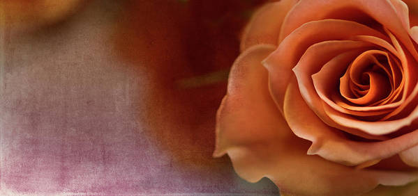 Rose Art Print featuring the photograph Haunted by Rebecca Cozart
