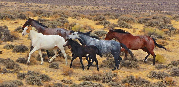 Horse Art Print featuring the photograph Wild Horse Family by Darlene Grubbs