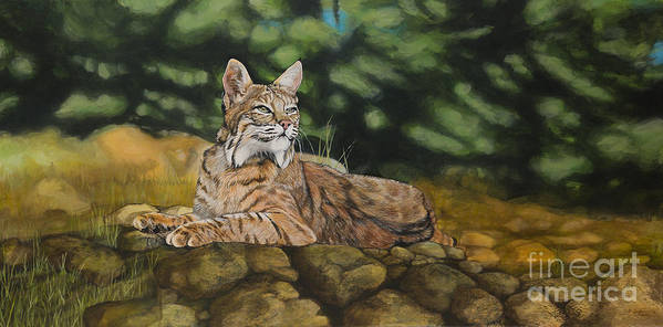 Bobcats Art Print featuring the painting Felicity by Jennifer Calicchio