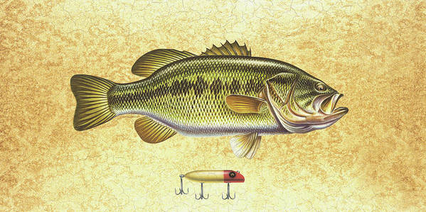 Bass Print featuring the painting Antique Lure And Bass by JQ Licensing