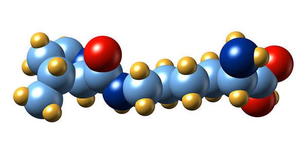 Pyrrolysine Art Print featuring the photograph Pyrrolysine, Molecular Model by Dr Mark J. Winter