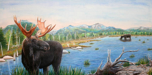Moose Art Print featuring the painting Moose At Baxter State Park by Brenda Baker