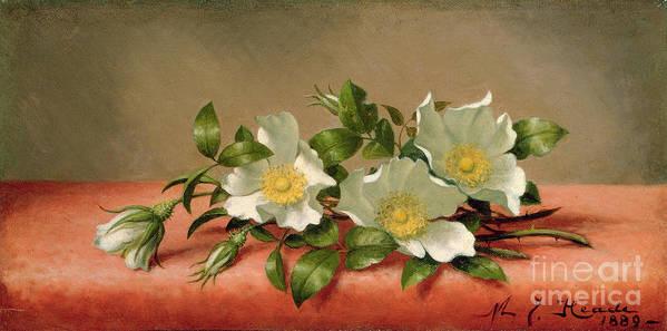 Cherokee Roses Art Print featuring the painting Cherokee Roses by Martin Johnson Heade