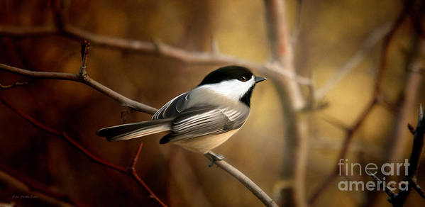 Black Capped Chickadee Art Print featuring the painting Following The Light by Beve Brown-Clark Photography