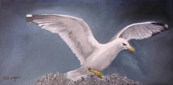 Seagull Art Print featuring the painting Herring Gull by Barbara Harper