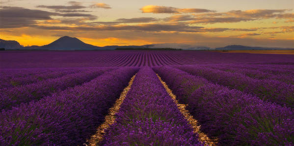 Dream Art Print featuring the photograph Lavender Provence by Andre Distel