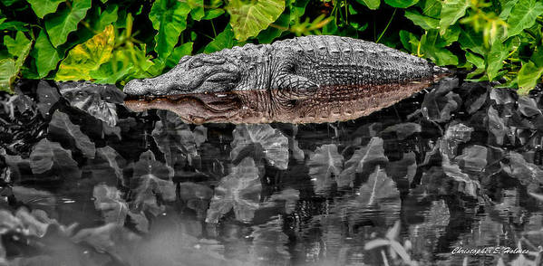 American Art Print featuring the photograph Let Sleeping Gators Lie - Mod by Christopher Holmes