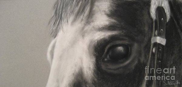 Horses Art Print featuring the drawing Sunshine Queenie I by Sabina Haas