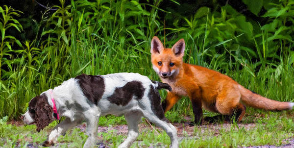 Fox Print featuring the photograph On The Scent Impasto by Steve Harrington
