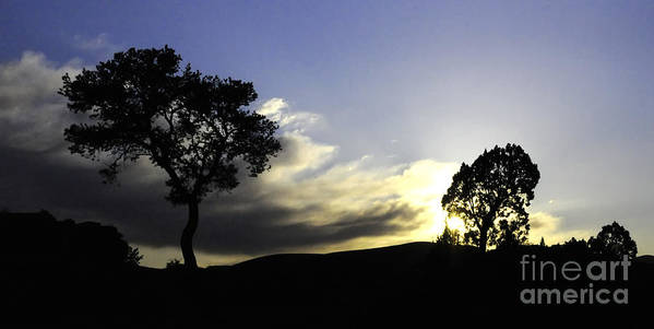 Trees Art Print featuring the photograph Trees On The Edge by Vivian Christopher
