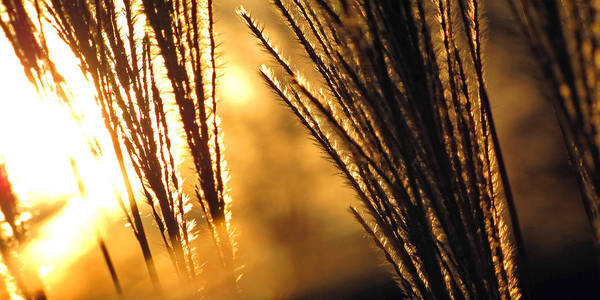 Panoramic Art Print featuring the photograph Sun Grass Wind by Amy Tyler