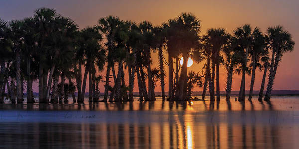 Florida Art Print featuring the photograph Illuminated Palm Trees by Stefan Mazzola