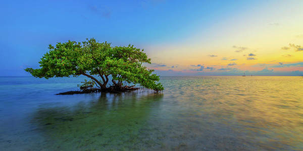 Mangrove Art Print featuring the photograph Isolation by Chad Dutson
